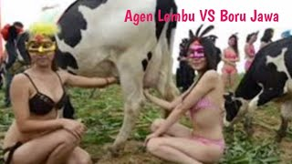 Download Mp3 Lagu Agen Lembu Remix Vs Boru Jawa