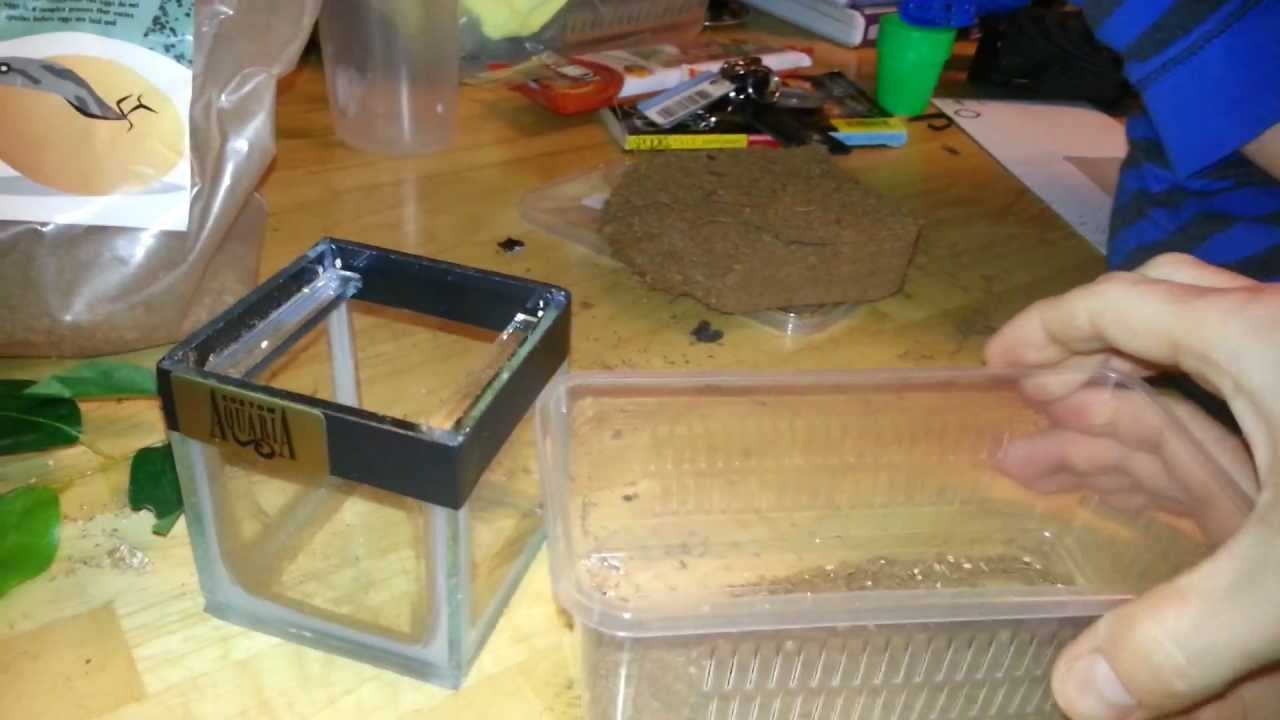 Small Tarantula Enclosure Tutorial Youtube