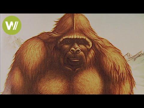Bigfoot und Yeti