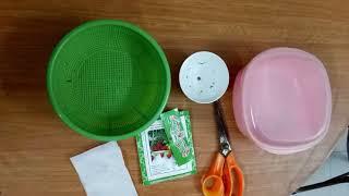 Hướng dẫn ủ hạt dâu tây đỏ