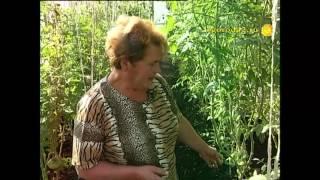 Секреты огородницы Татьяны Рабкановой