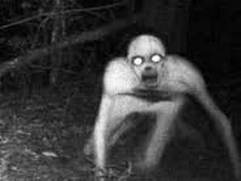 Загадочные существа снятые на камеру ч2