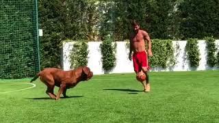 La reacción del hijo de Messi al verle jugar con su perro en vacaciones