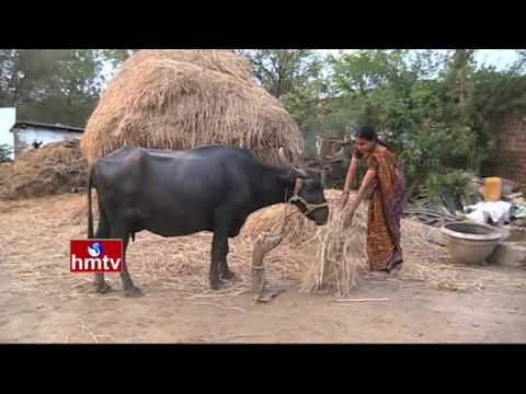 Women's  Success Story in Dairy farming | Warangal | Nela Talli | HMTV