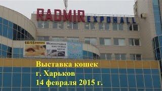 Kharkiv.international 😈cat show.😈Международная выставка кошек.😈Радмир 'экспохолл