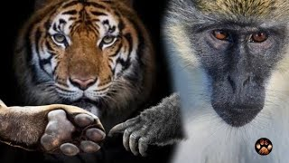 Can Tiger and Monkey be Friends? Survival of the Fittest
