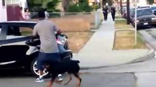 Rottweiler Got Shot By Police Man