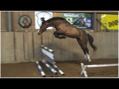 ---SOLD---Khedira, 2015, Kafka x Contact, free jumping   auction 12-17