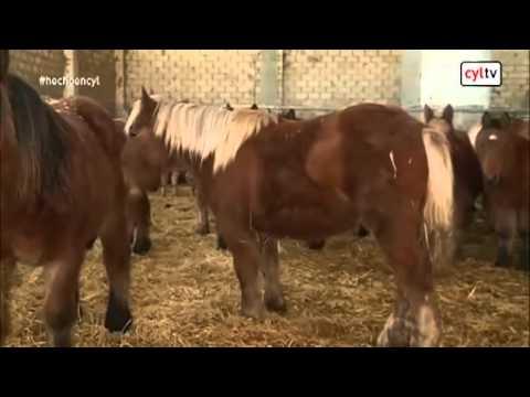 Carne de Potro de Burgos en 'Hecho en Castilla y León' de RTVCyL