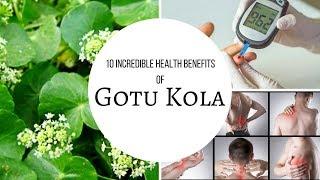 10 Incredible Health Benefits Of Gotu Kola