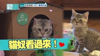 【萌寵】貓奴趕緊看過來!超萌貓咪在這裡