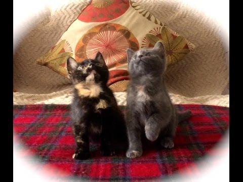 0 2 gatinhos dançando na Rave