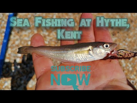 Sea Fishing At Hythe, Kent - Catching Fish In A Tough Session