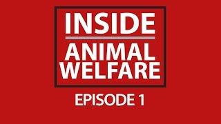 Inside Animal Welfare - Episode 1 Thumbnail