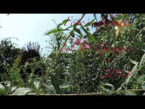 I Miei Goji piantati a dicembre del 2012 Averardo Vallicelli vallav@libero.it