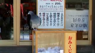 竹駒神社の鳩 thumbnail