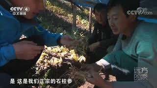 [远方的家]大好河山 秋醉鸭绿江| CCTV中文国际
