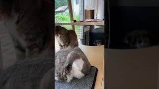 다들 순삭!!!! 캣타워는 피신타워 #고양이 #청소는귀…