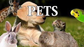 Misinformed - Pets