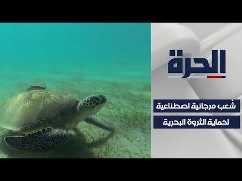 في مصر.. شعاب مرجانية اصطناعية تحاكي الطبيعية  - نشر قبل 9 ساعة