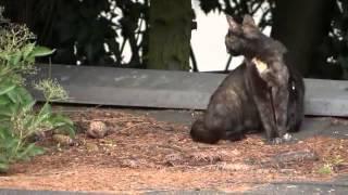 Мои уличные кошки - Германия! Котята!