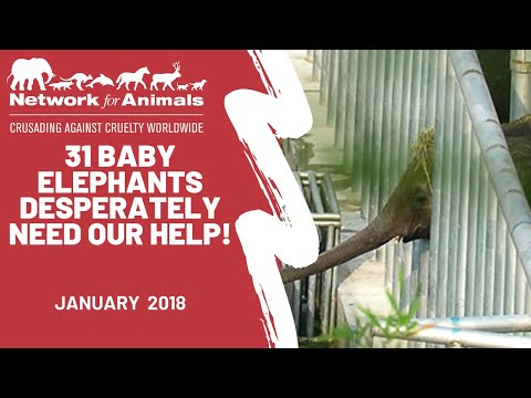 31 baby elephants desperately need our help!