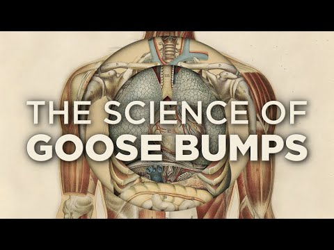 Why Do We Get Goose Bumps?