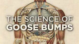 Why Do We Get Goose Bumps?