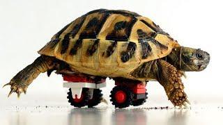 Schildkröte kommt vom Tierarzt nach Hause - den Besitzer haut es fast vom Hocker!