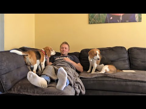Jealous Dogs Demand Attention and Petting | Cute Dogs Charlie and Lilly