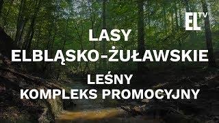 Lasy Elbląsko-Żuławskie - Leśny Kompleks Promocyjny