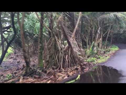 Hidden Hawaii: The Enchanted Red Road in Puna on Big Island Hawaii