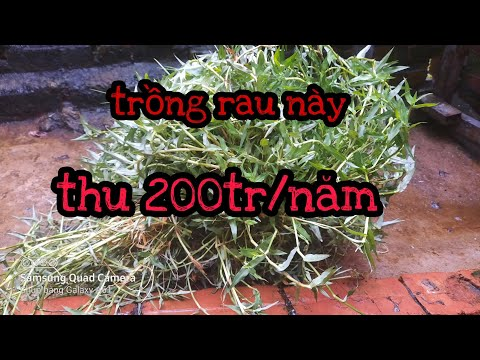 Nhà Nông Làm Giàu, làm giàu từ cây cỏ,@ nhà nông ơi.@ cuộc sống VN #letuyen tv