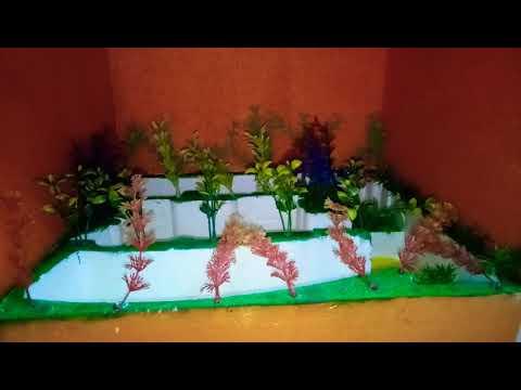 School Project - Modern Horticulture Model (www.schoolprojectcenter.in)