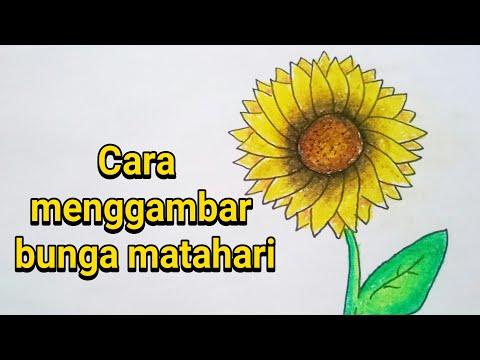 Cara Menggambar Dan Mewarnai Bunga Matahari Dengan Mudah Untuk Pemula Youtube