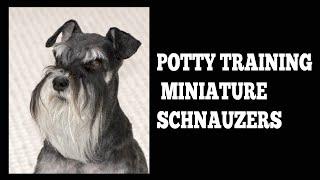 How To Easily Potty Train Miniature Schnauzers