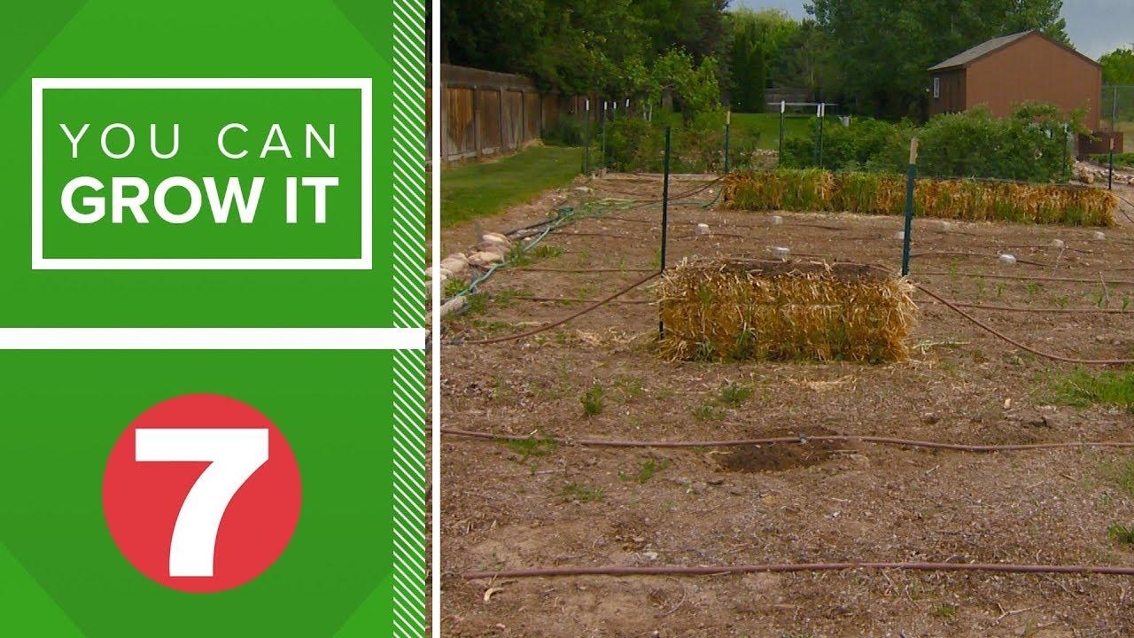 You Can Grow It: Straw bale gardening - YouTube