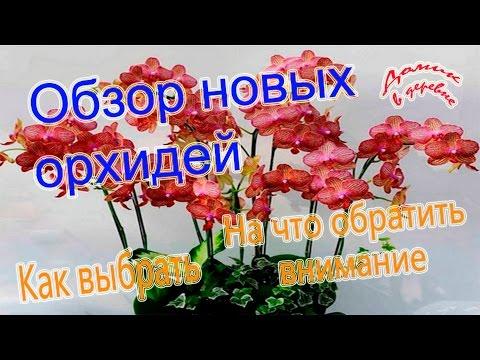 Обзор новых орхидей.  На что нужно обратить внимание при покупке.  03.03.17
