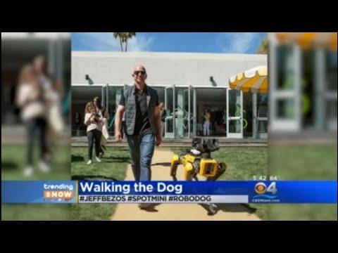 Trending Jeff Bezos Takes Robotic Dog For A Walk Youtube