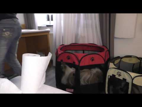 My puppypen for show and travel. In hotel Dortmund.