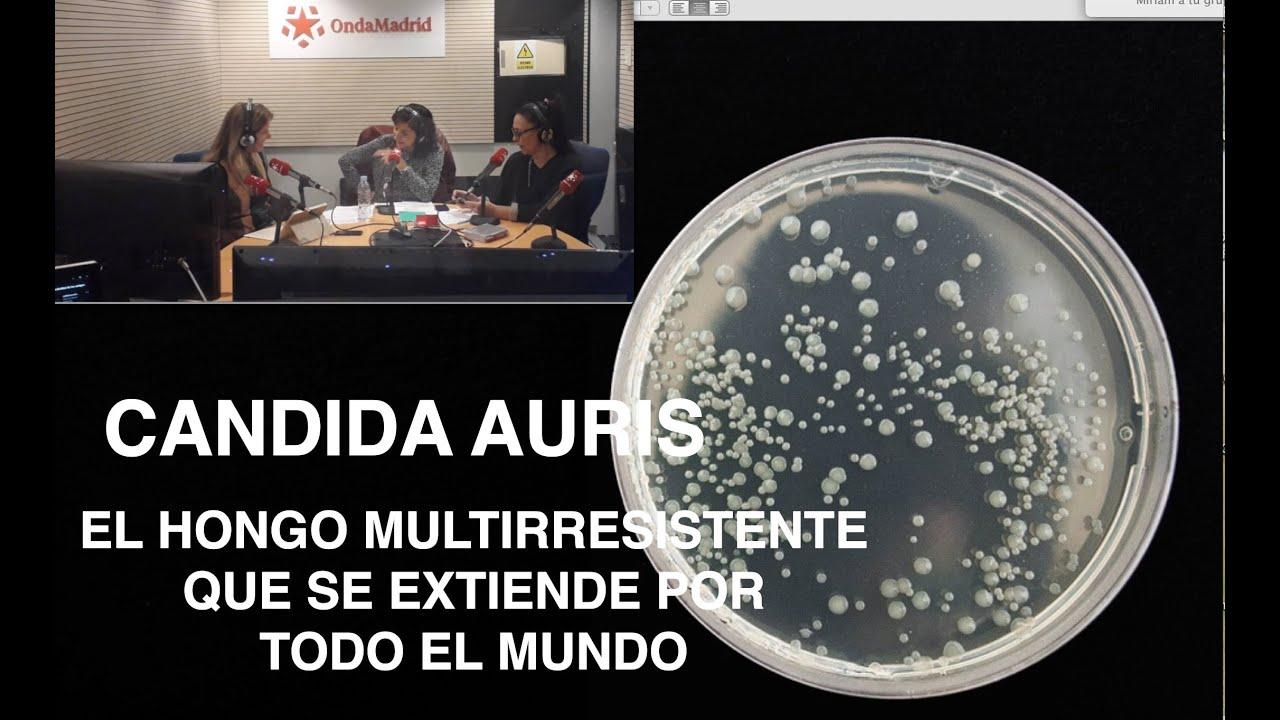 El misterioso hongo multirresistente Candida Auris se extiende por todo el mundo