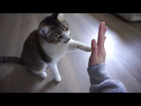 CAT TRICKS