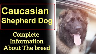 Caucasian Shepherd Dog. Pros and Cons, Price, How to choose, Facts, Care, History