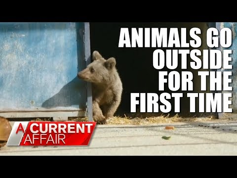 Animals Set Free For The First Time | A Current Affair Australia