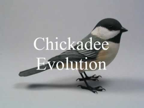 Chickadee Evolution Wood Carving - YouTube
