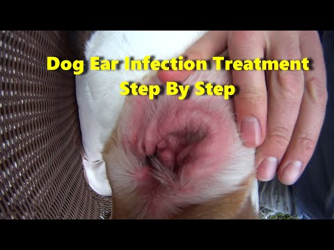 Doctor Prescribed - Dog Ear Infection Treatment That Works