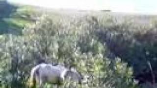 حمار, بغل, وحصان في الجنان المخيف horse