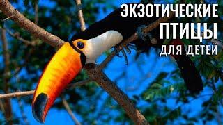 Учим птиц, развивающие мультики,видео для детей экзотические птицы и их голос