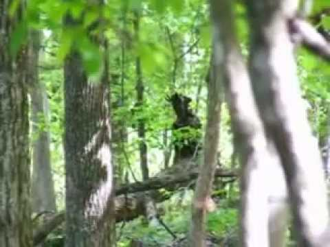 Creepy Figure in Tennessee Woods