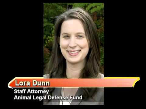 Animal Abuse Registries 1-19-16